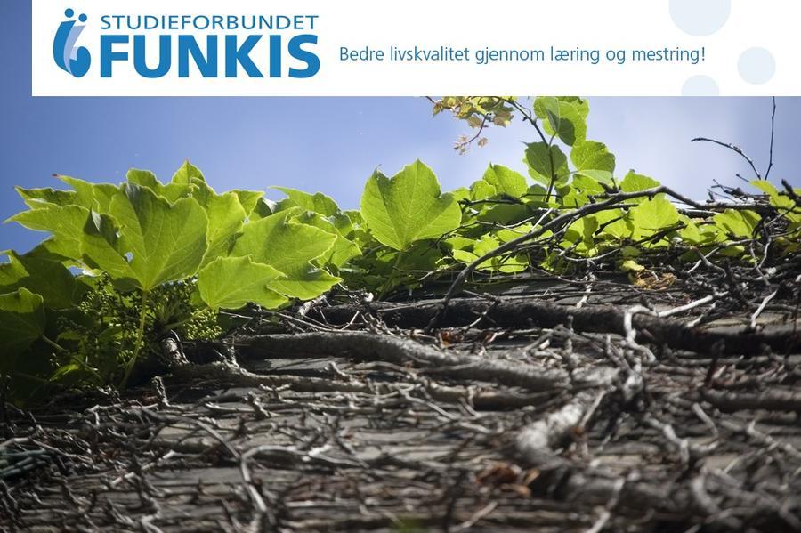 Grønne blader vokser opp av jorden.