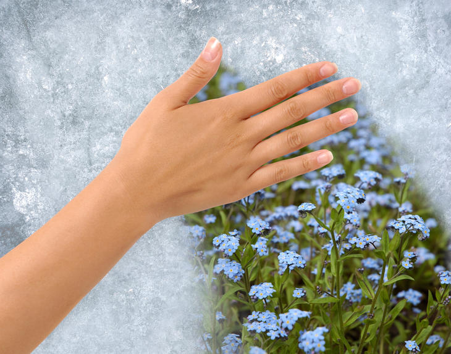 Hånd som drar is vekk fra vindusrute og avdekker blomster utenfor.