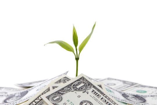 En plante spirer opp av en pengebunke.